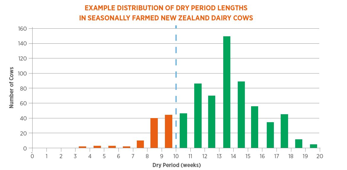 Distribution of Dry Period Lengths