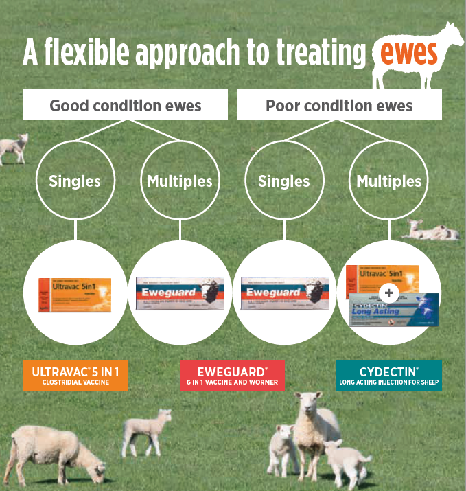 Ewe Treatments