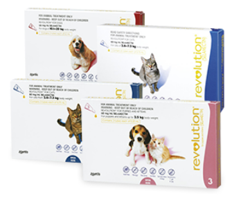Revolution for Dogs | Zoetis NZ